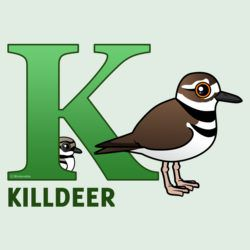 K is for Killdeer