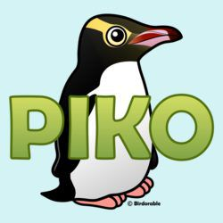 Piko, the Yellow-eyed Penguin