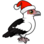 Palm-nut Vulture Santa