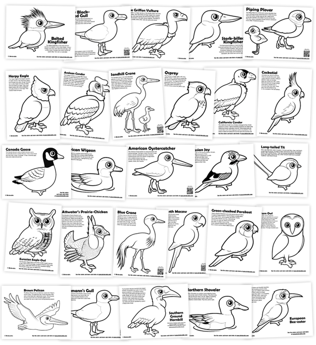 Coloring Pages (page 2) < Categories - Birdorable Blog