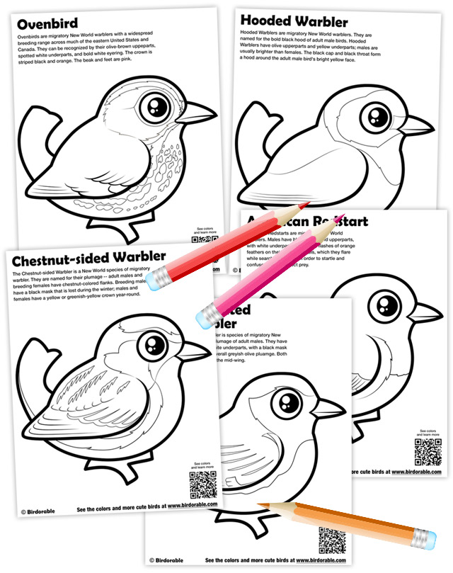 Birdorable Warbler Coloring Pages