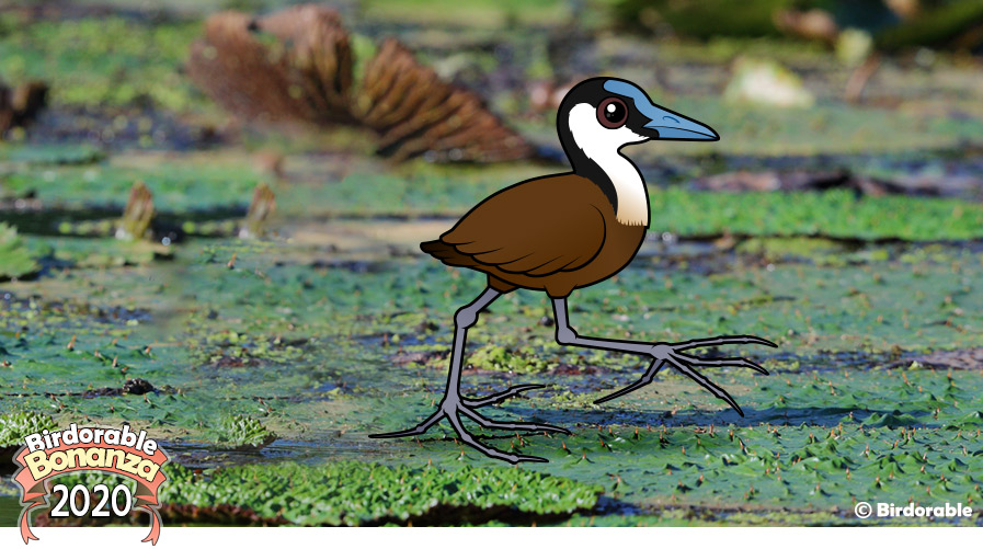 Birdorable African Jacana
