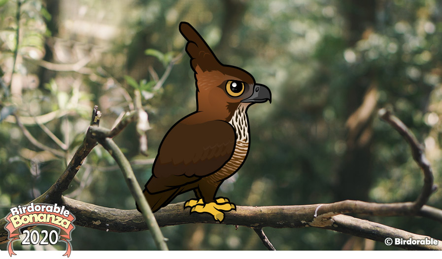 Birdorable Javan Hawk-Eagle