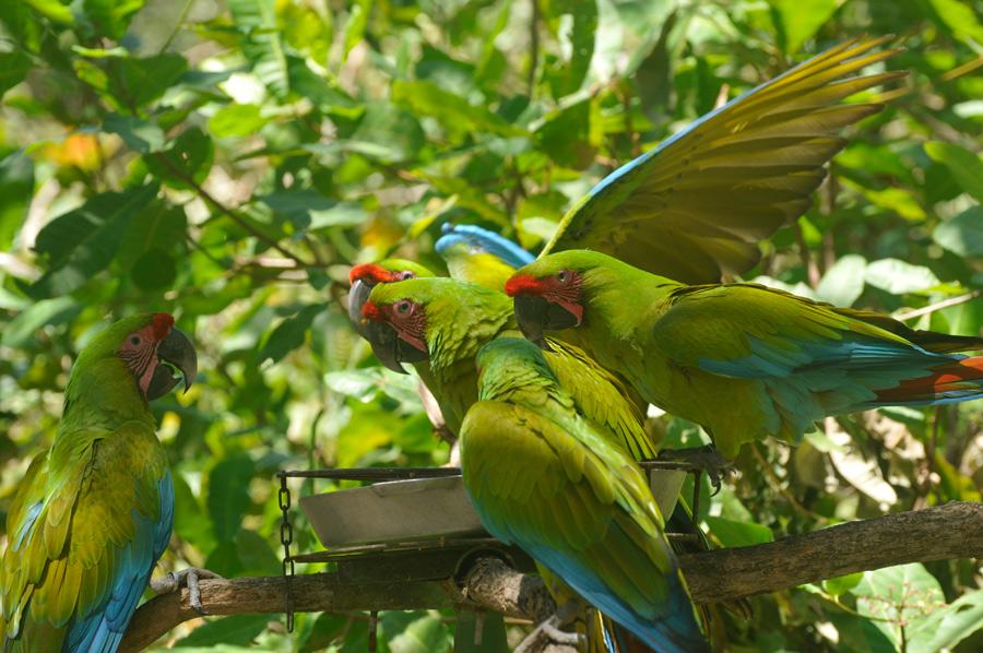 Conservation Categories Birdorable Blog