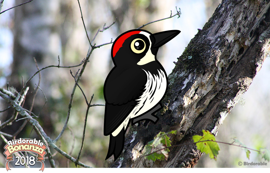 Birdorable Acorn Woodpecker