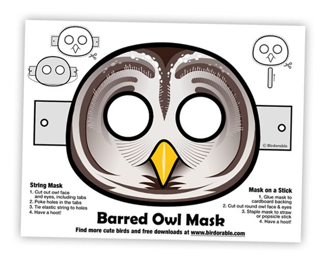 Fun Barred Owl Mask
