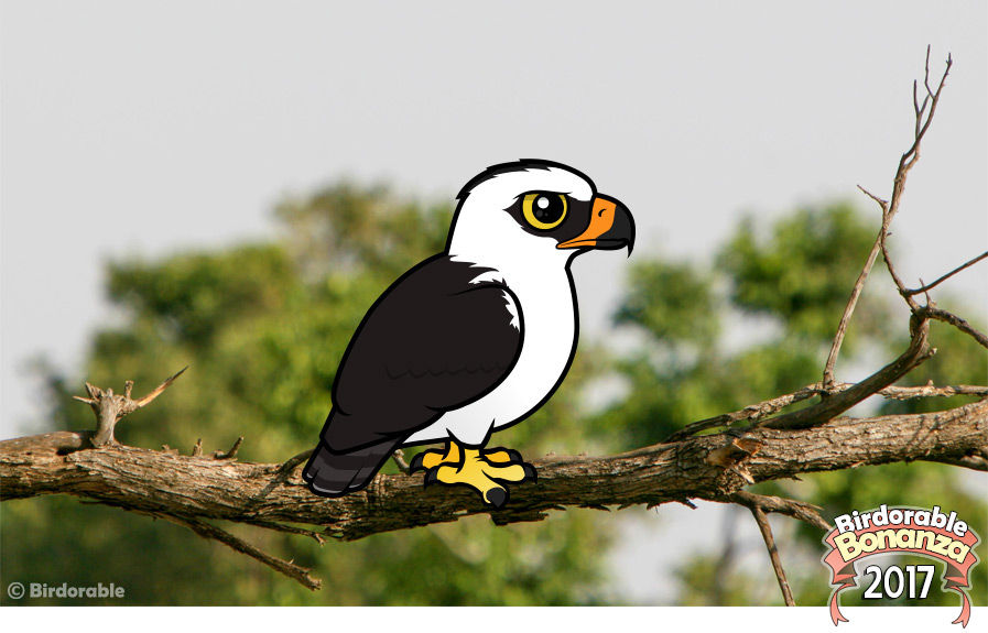 Birdorable Black-and-white Hawk-Eagle