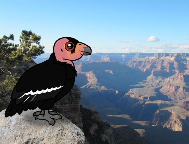 Birdorable California Condor