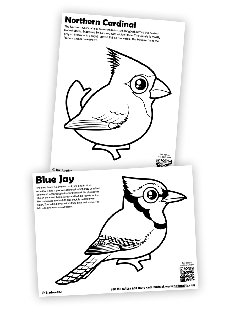 Birdorable Northern Cardinal and Blue Jay coloring pages