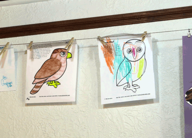 Birdorable Coloring Pages at Audubon Center for Birds of Prey in Maitland, Florida