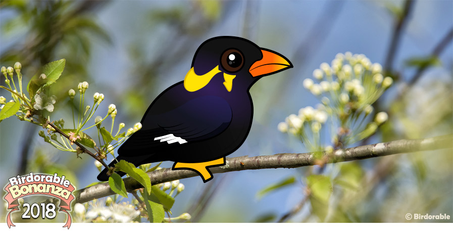 Cute Birdorable Common Hill Myna