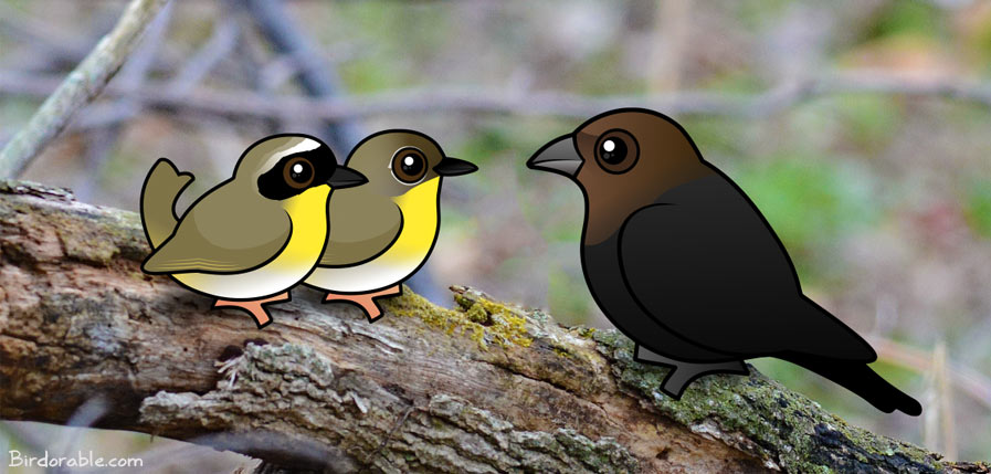 Birdorable Common Yellowthroats with Brown-headed Cowbird