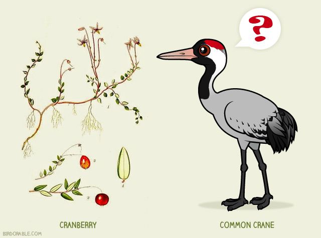 Cranberry plant and Common Crane by Birdorable
