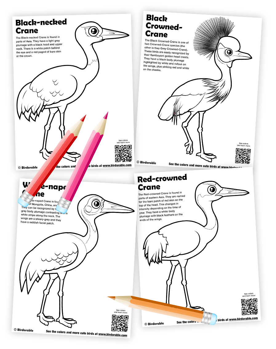 Birdorable crane coloring pages