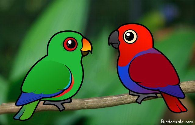 Birdorable Male and Female Eclectus Parrots