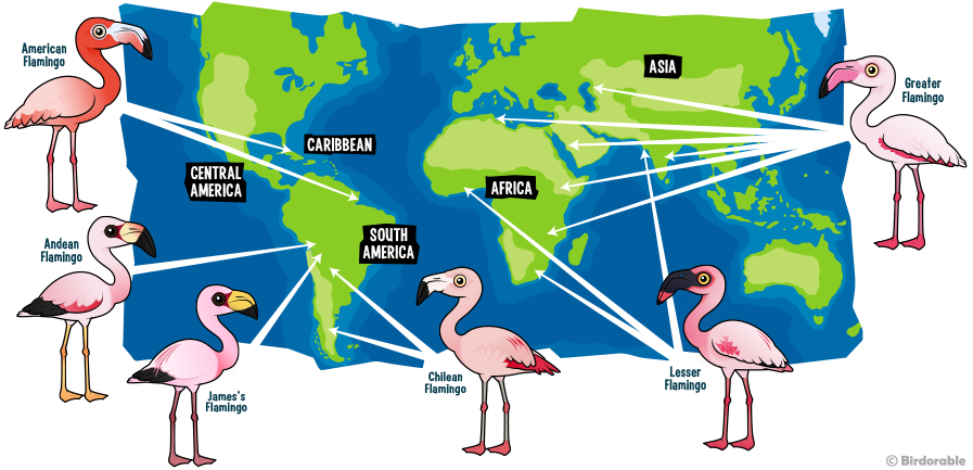 World range map of Flamingo species around the world