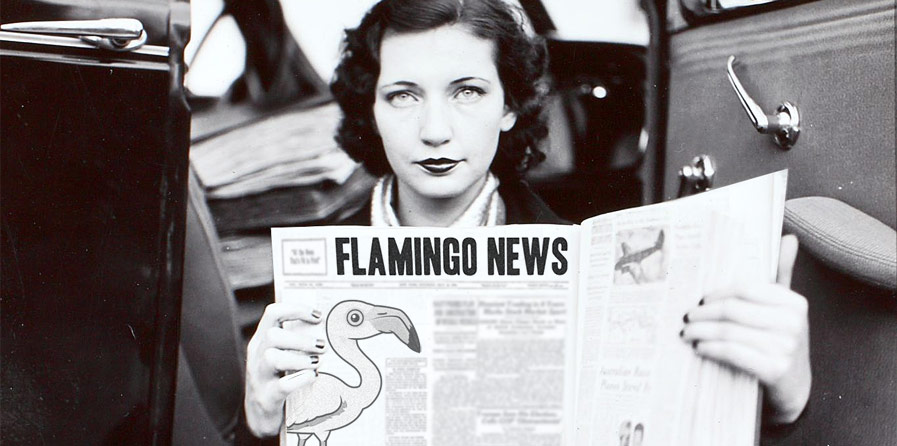 Flamingo News