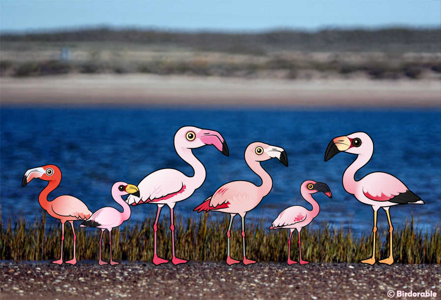 All Birdorable Flamingos