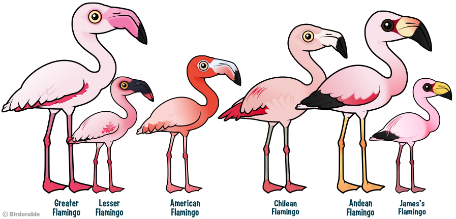 Birdorable Flamingos of the World