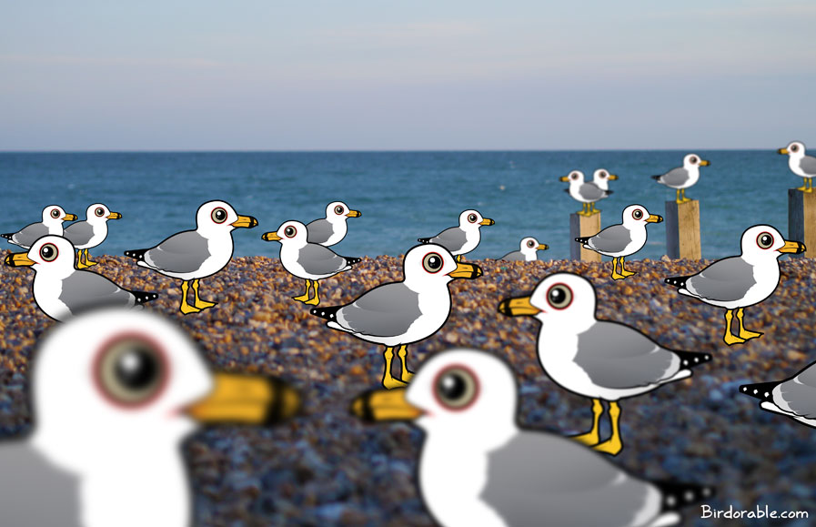 Birdorable Flock of Ring-billed Gulls