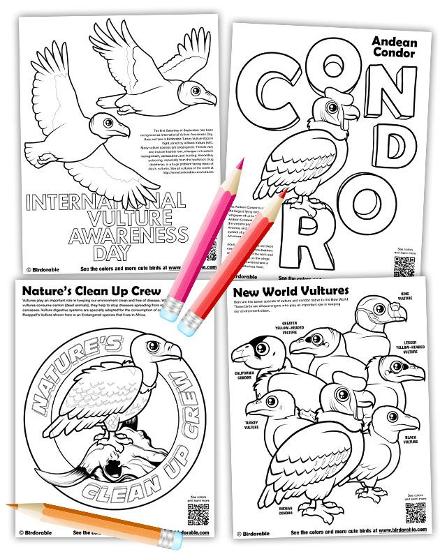 Four new vulture coloring pages by Birdorable
