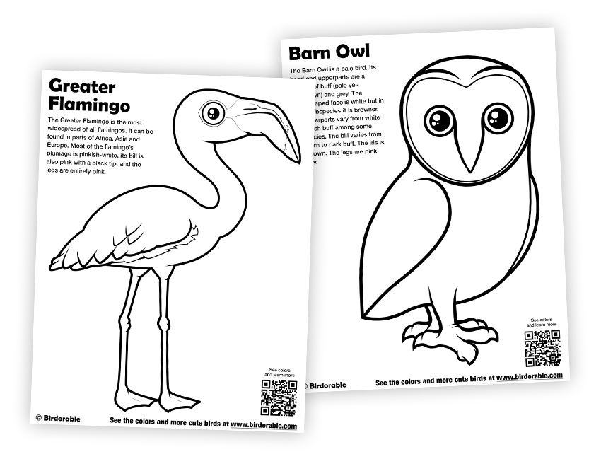 Flamingo And Barn Owl Coloring Pages In Coloring Pages Free Downloads