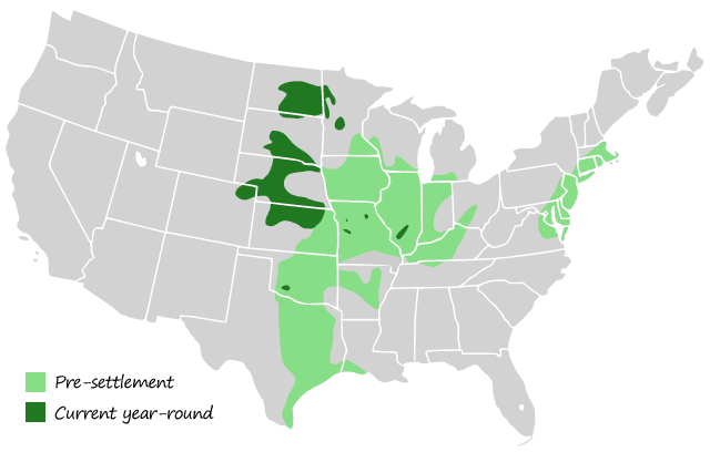 Greater Prairie Chicken Range
