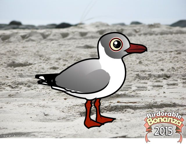 Birdorable Grey-hooded Gull