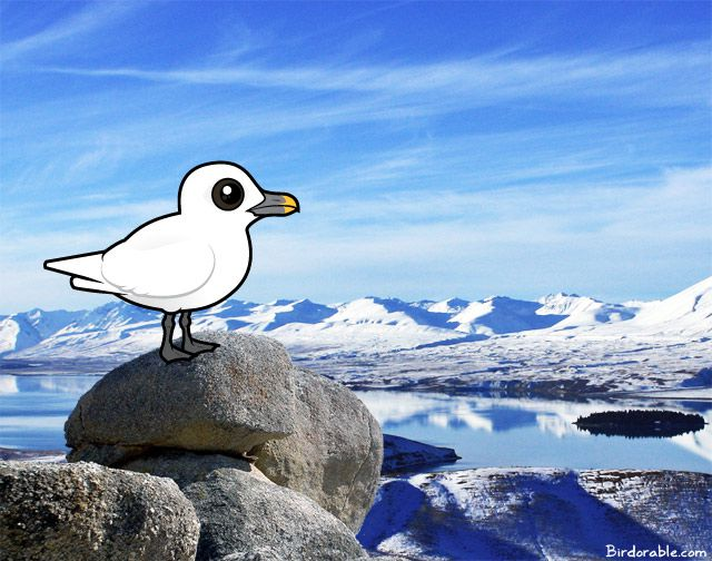 Birdorable Ivory Gull