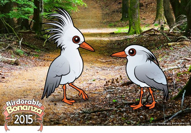 The Kagu Is A Flightless Bird With Pearly Grey Plumage And Bright Orange Legs Bill Eyes Are Dark Red Kagus Have Long Head Crest That May Be