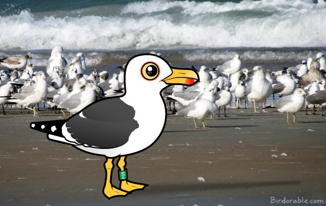 Birdorable Lesser Black-backed Gull in Florida