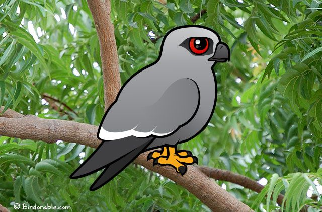 Birdorable Mississippi Kite
