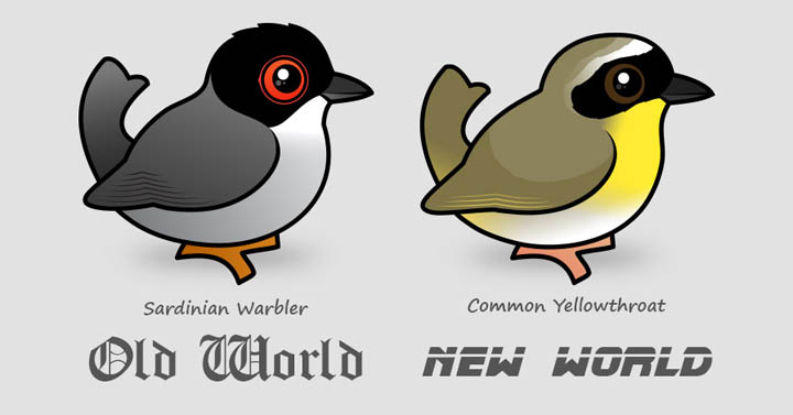 Compare old and new world warblers