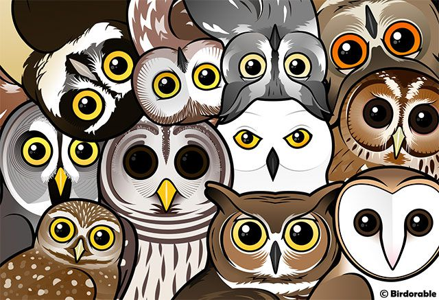 Birdorable Owls Portrait