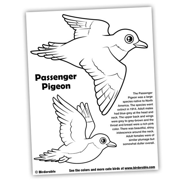 Birdorable Passenger Pigeon Coloring Page