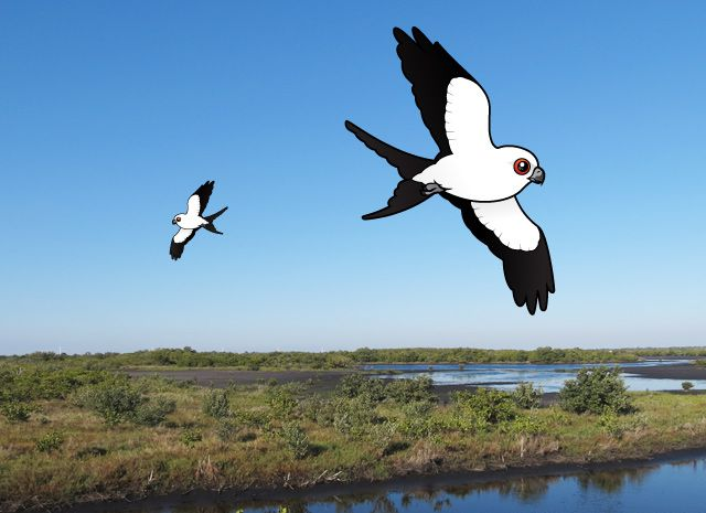 Birdorable Swallow-tailed Kites over Florida