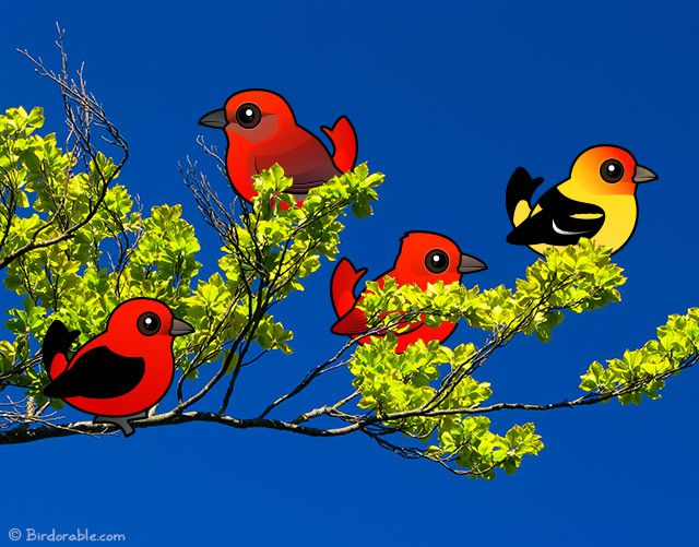 Birdorable tanagers on a branch