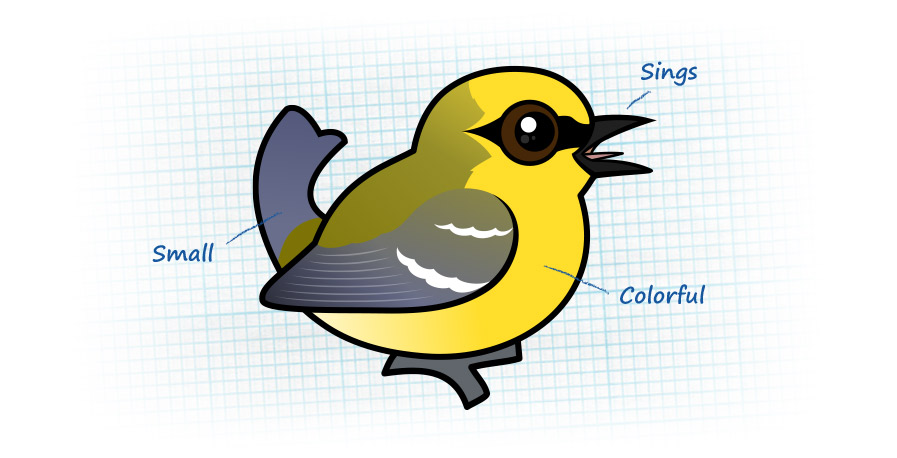 What is a warbler?
