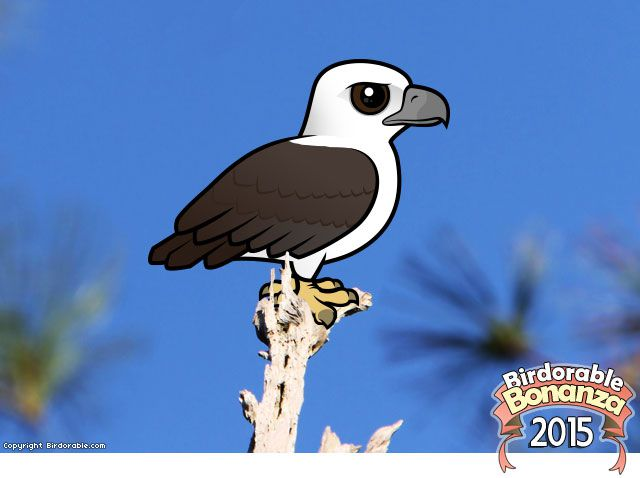 Birdorable White-bellied Sea Eagle