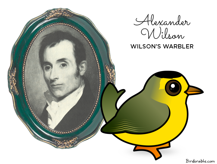 Wilson's Warbler named after Alexander Wilson