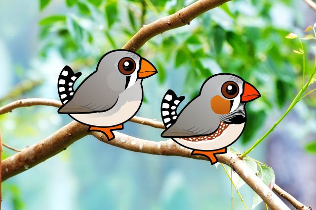 Birdorable Zebra Finches